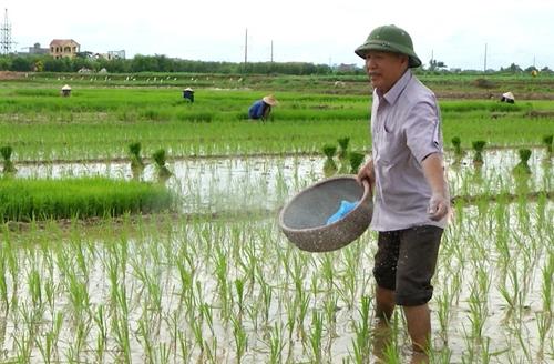 """Ông """"thần nông"""" ở Hồng Quang"""