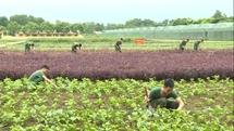 Bảo vệ môi trường về mọi mặt trong công tác hậu cần