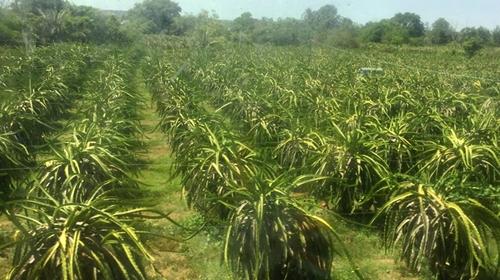 Nông nghiệp ứng dụng công nghệ cao, đòn bẩy chuyển đổi cơ cấu kinh tế