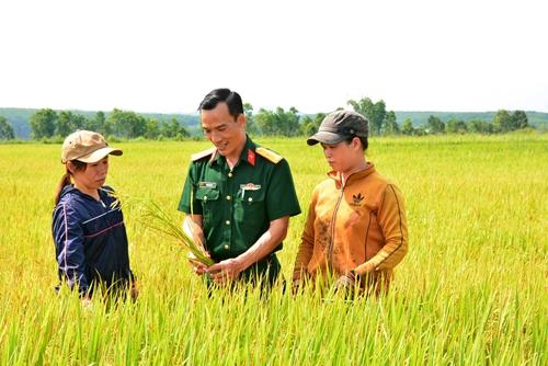 Bám ruộng, bám dân để phát triển cây lúa