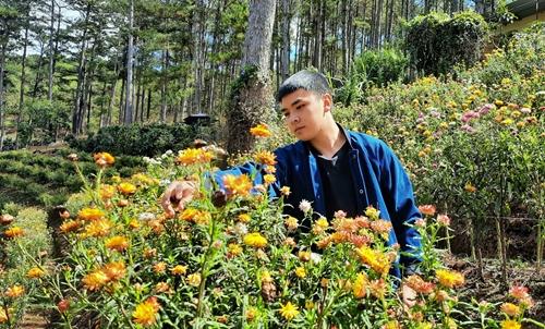 Hấp dẫn rừng hoa bất tử tại Đà Lạt
