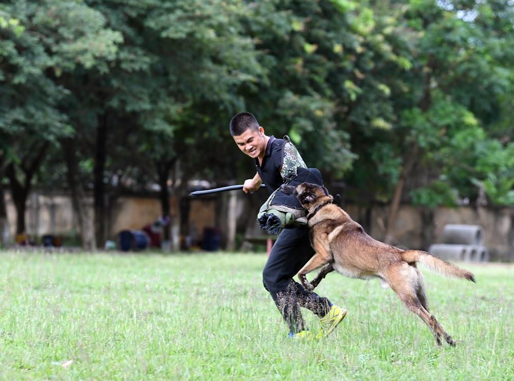 Nội dung Phòng thủ các chú chó nghiệp vụ sẽ phải tìm kiếm kẻ đột nhập, ngăn chặn nỗ lực tẩu thoát, chống lại cuộc tấn công khi canh giữ, áp giải phía sau, bảo vệ khỏi cuộc tấn công trực diện...