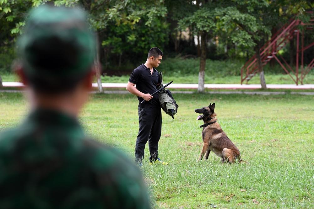 Nội dung này người đóng thế cũng phải to, cơ bắp giúp chó làm quen khi tham gia thi đấu quốc tế.