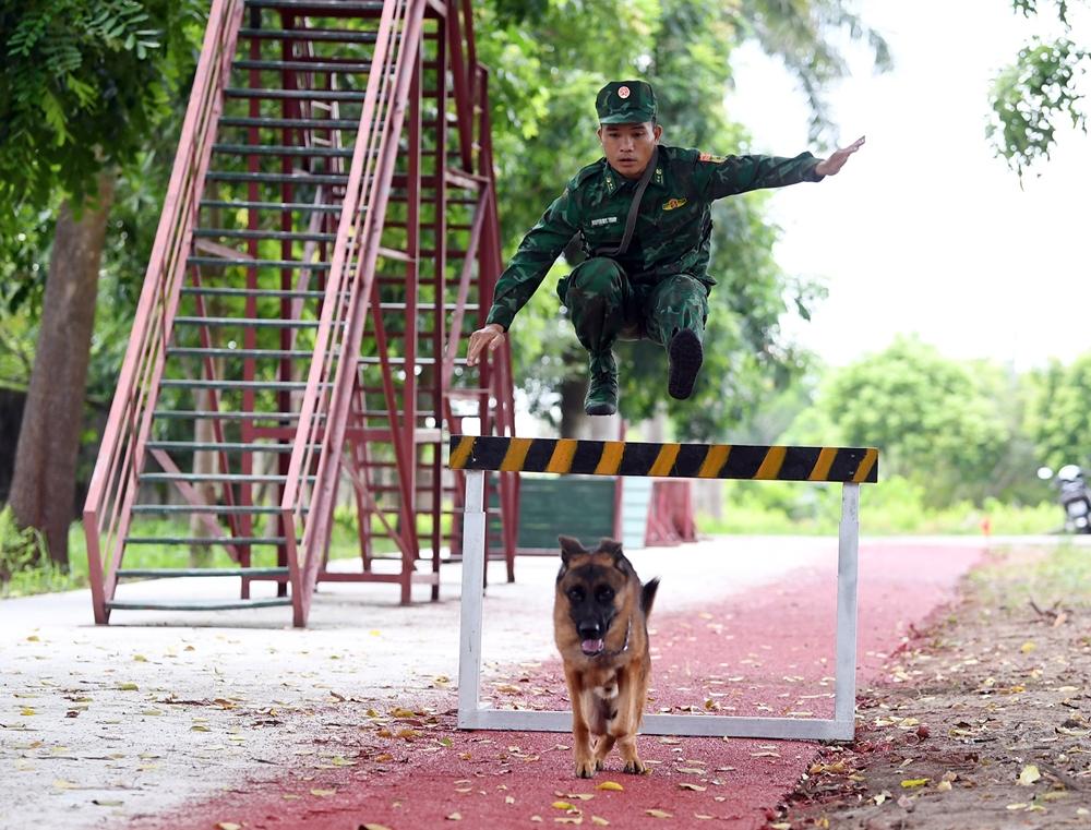 Tất cả các nội dung chướng ngại vật đều yêu cầu cả huấn luyện viên và các chú chó phải vượt qua nhanh nhất.