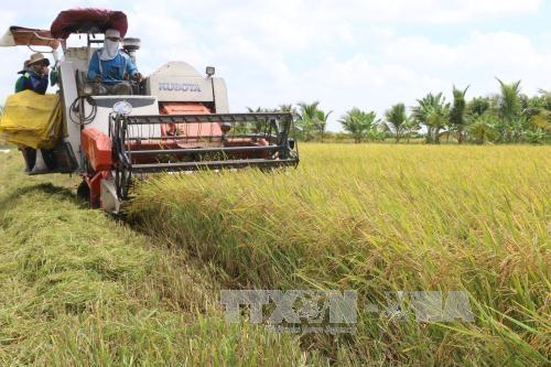 Cần linh hoạt trong thu hoạch nông sản