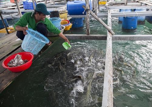 Cần khơi dậy tiềm năng nuôi trồng thủy sản trên biển