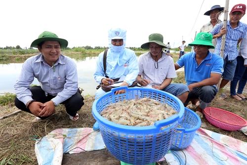 Cứu ngành tôm khỏi đứt gãy chuỗi sản xuất