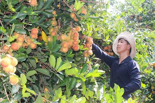 Phát triển nông nghiệp công nghệ cao ở huyện nông thôn mới kiểu mẫu