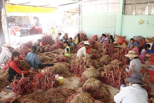 Thương mại điện tử và nông sản của người dân