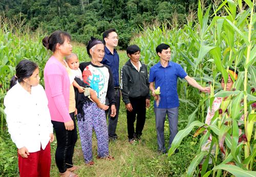 Cuộc sống mới của người Đan Lai ở Thạch Sơn