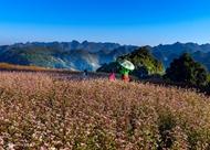 灰色岩石高原上的花朵