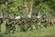越南南方解放军对南方解放、国家统一事业的历史意义