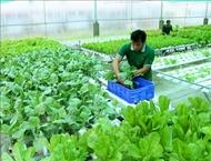 越南有机农产品在澳大利亚市场的发展前景广阔