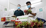 美国——越南水果的潜在进口市场