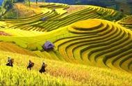 河江省线上推介黄树皮梯田的壮美风光