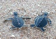 越南两处生物圈保护区被联合国教科文组织提名