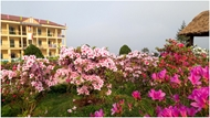 """""""Rhododendron school"""" - a tourism hit in Lao Cai"""