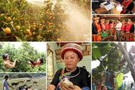 National target program on socio-economic development in ethnic minority areas approved