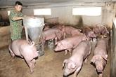 Chủ động phòng, chống dịch bệnh cho đàn gia súc, gia cầm trong vụ Đông-Xuân