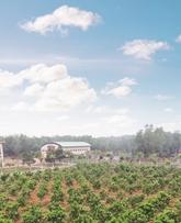 Phát triển vườn cây ăn quả tập trung bảo đảm tự túc trái cây trong bữa ăn bộ đội